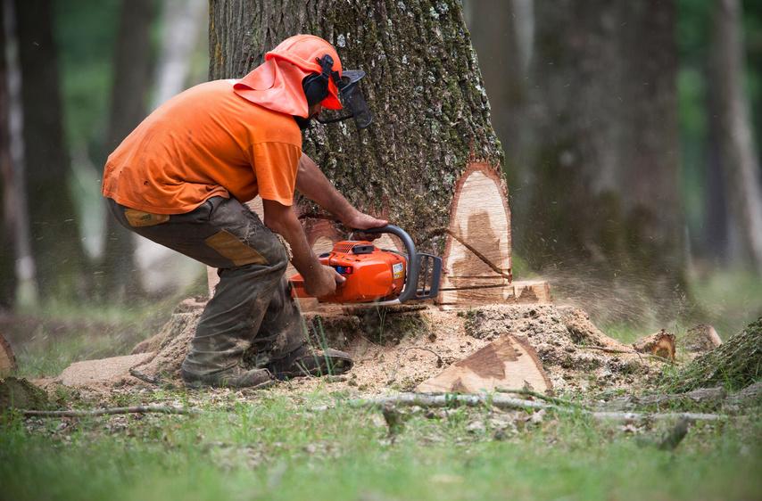 Abattage d\'arbre