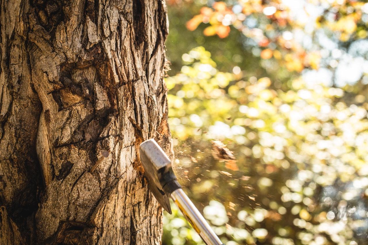 abbatage d'un arbre