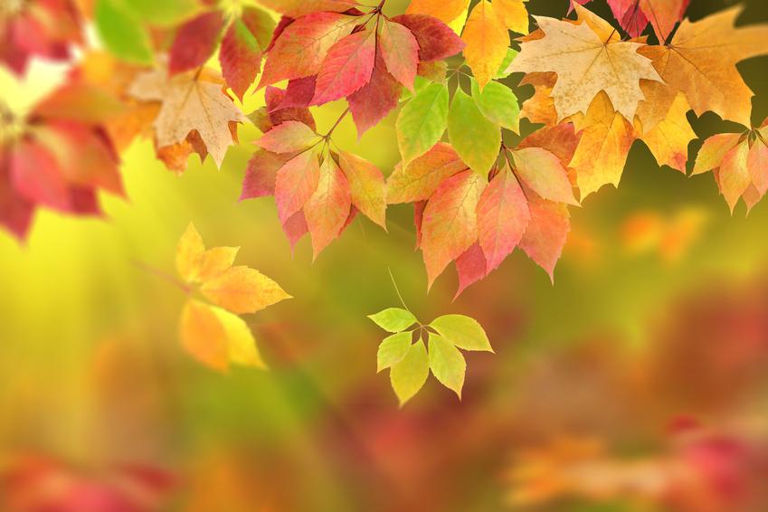 Branche aux couleurs de l'automne