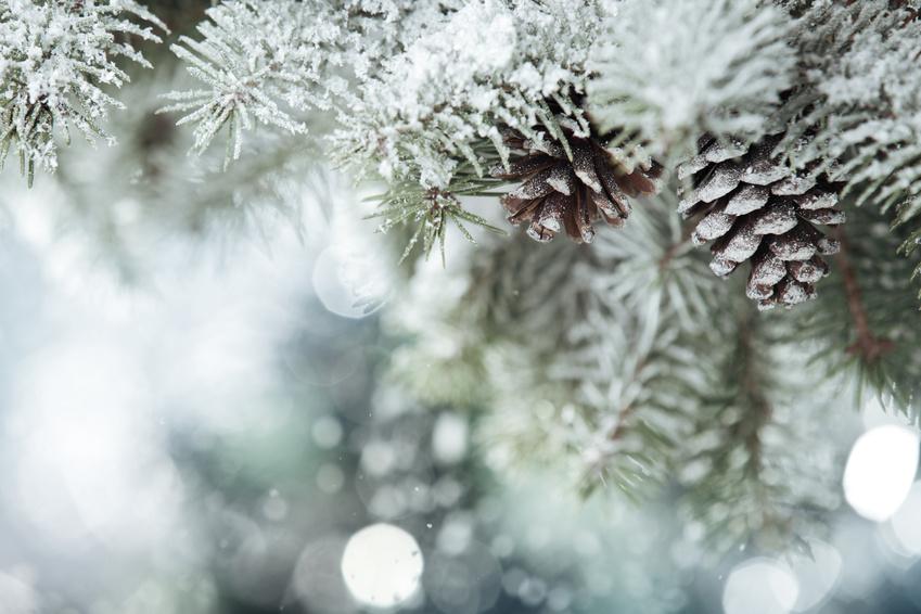 Branche aux couleurs de l'hiver