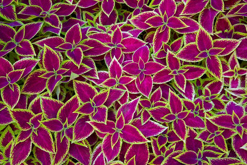 Plantes Decoratives De Jardin