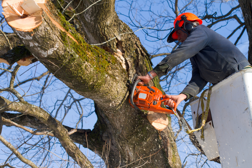 Elagage d\'arbre