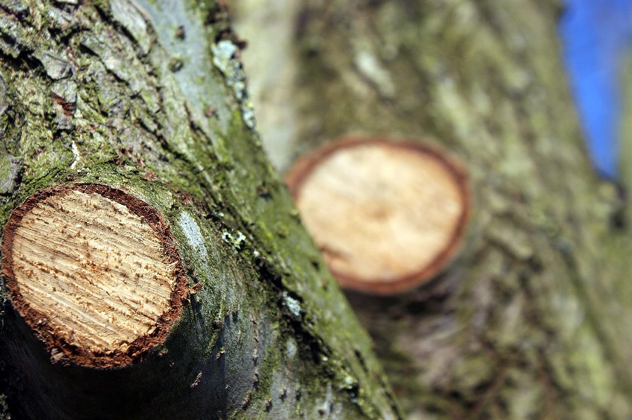 éléager des arbres