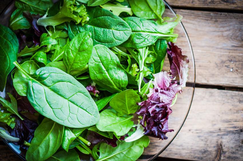 épinards et feuilles de salade