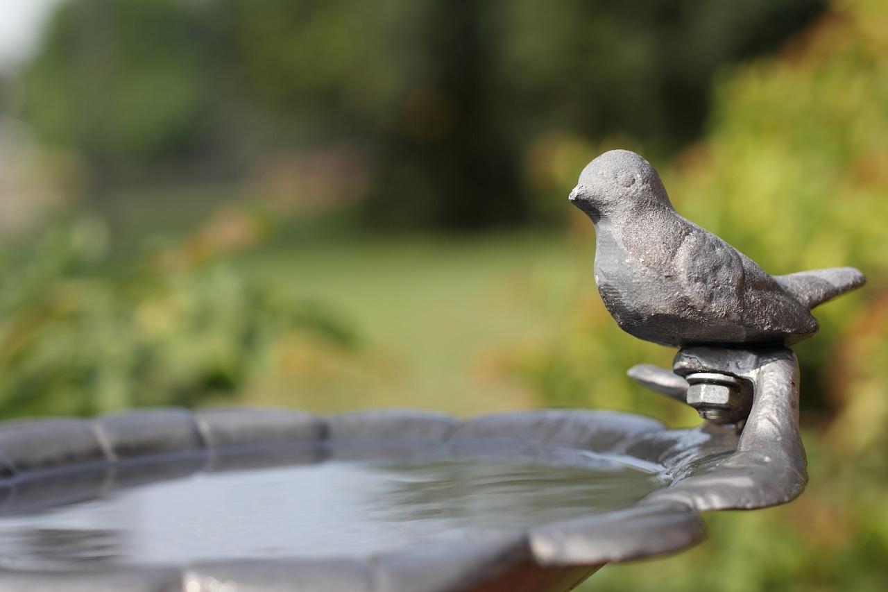 fontaine oiseau