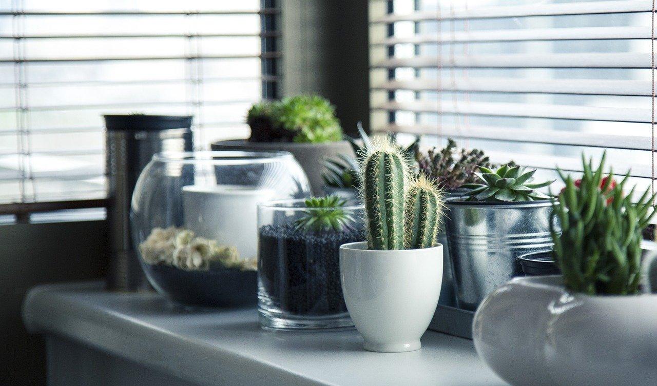 grandes plantes d'intérieur