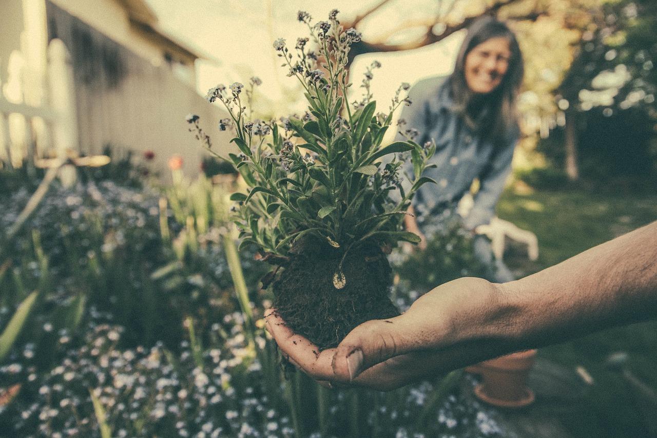 jardin écologique et design