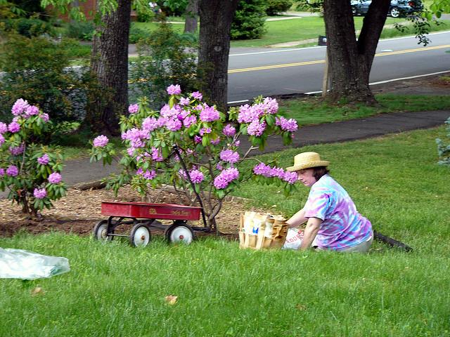 Entretien du jardin quelques conseils pratiques for Conseil entretien jardin