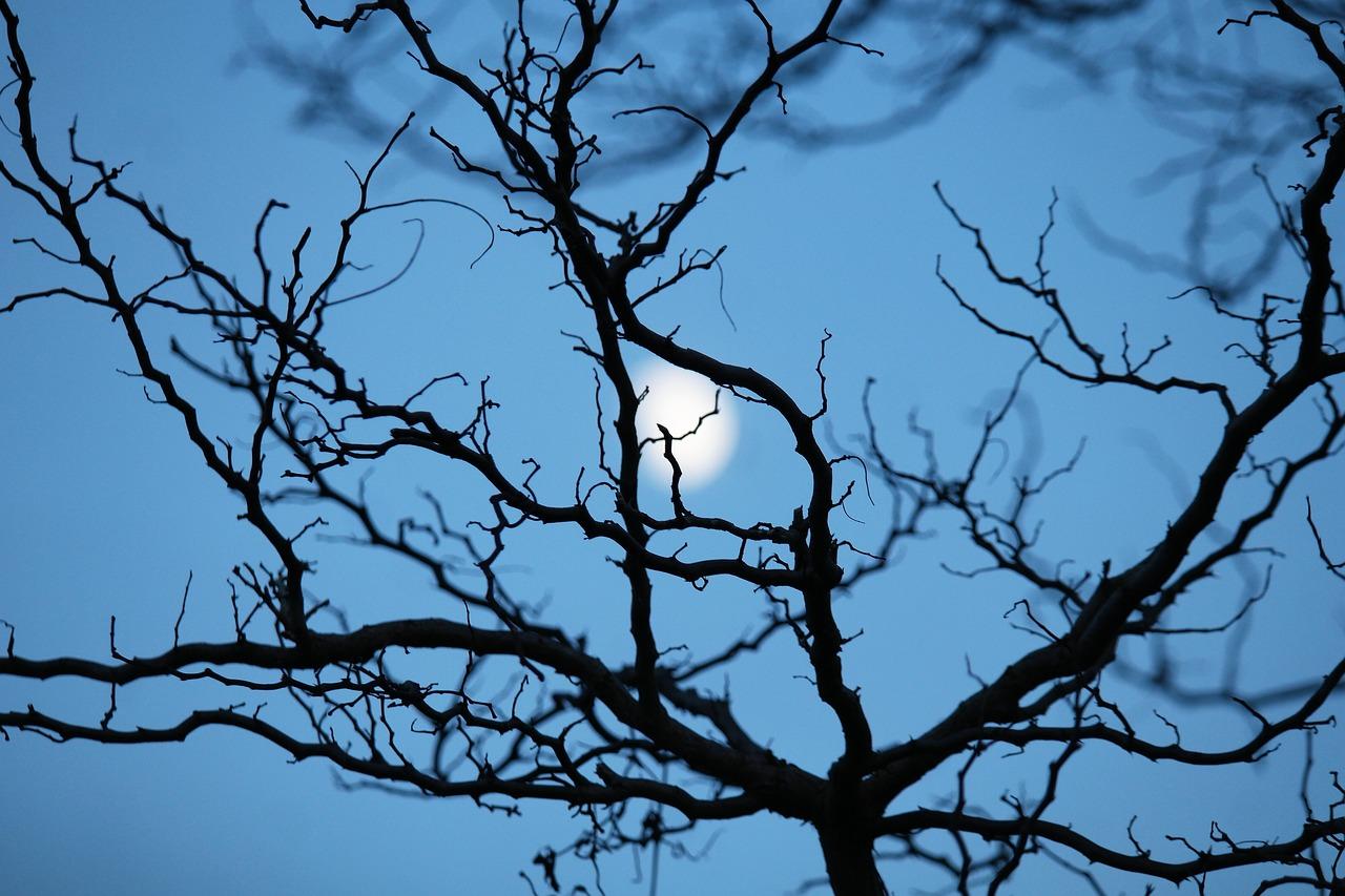 jardiner avec la moon