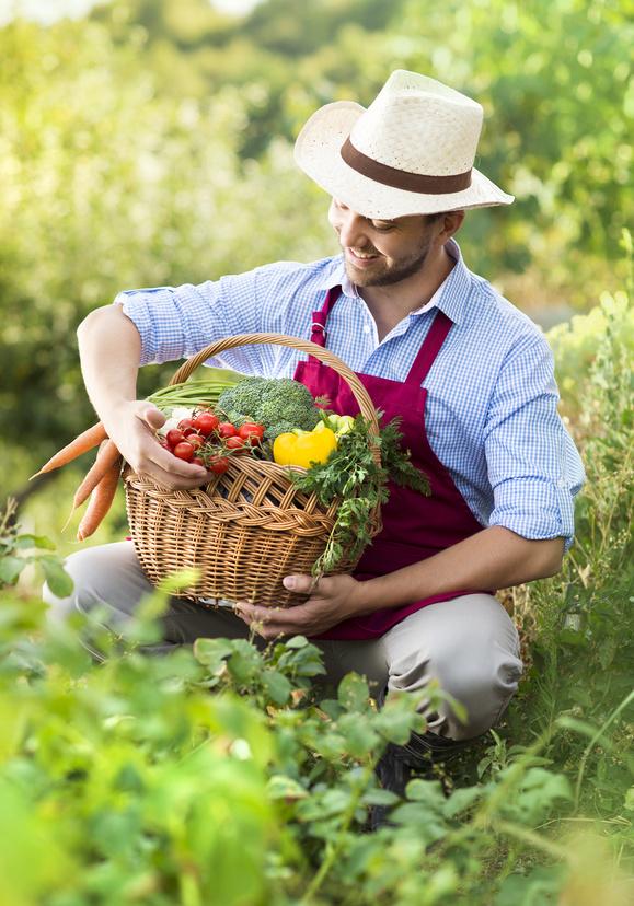 Jardinier ramassant des légumes
