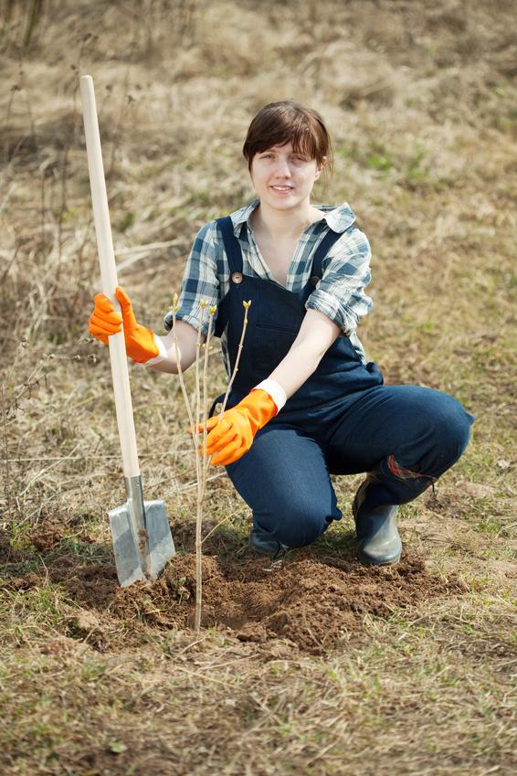 jeune fille plantant une pousse d'arbre