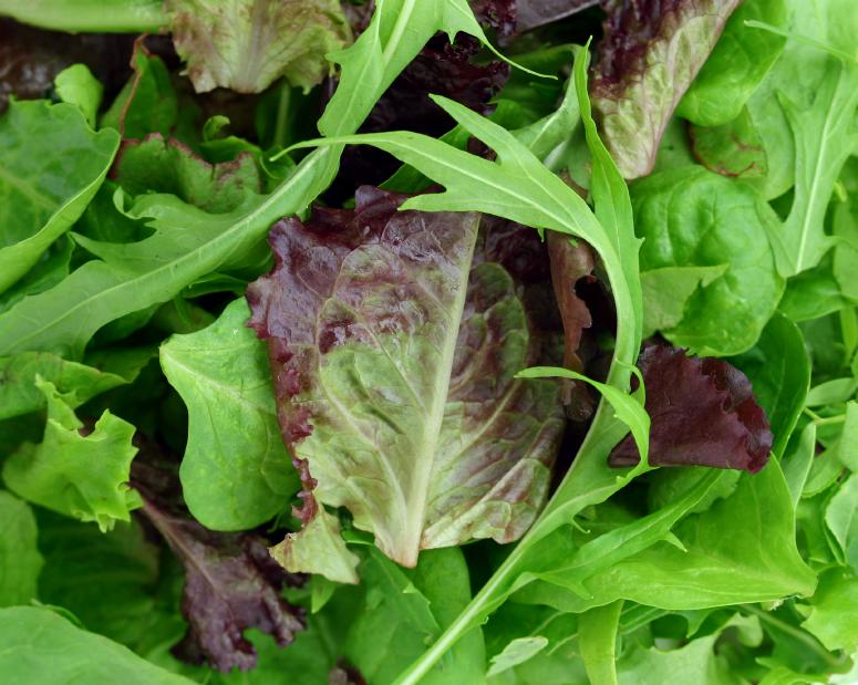 Mélange de salades vertes