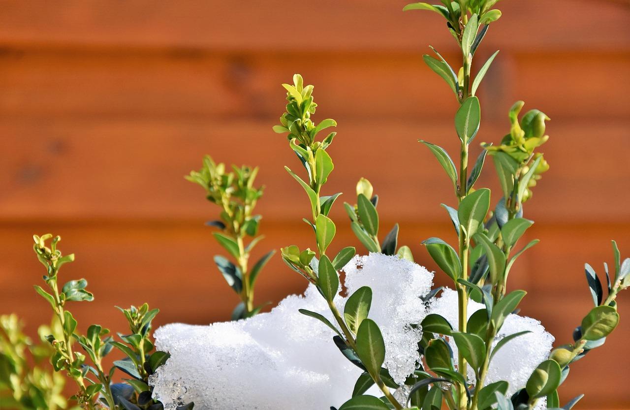 neige et jardin