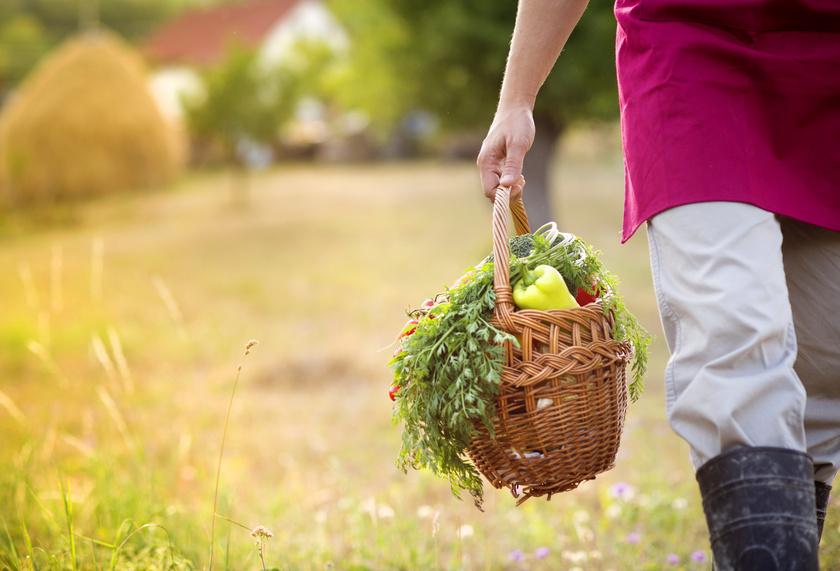 Panier de légumes sous le soleil de l'été