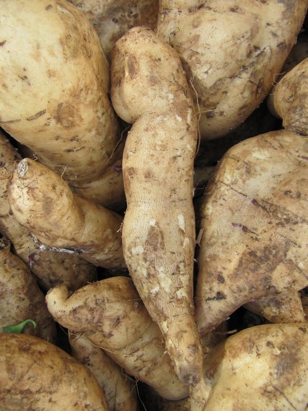 Pommes de terre douces