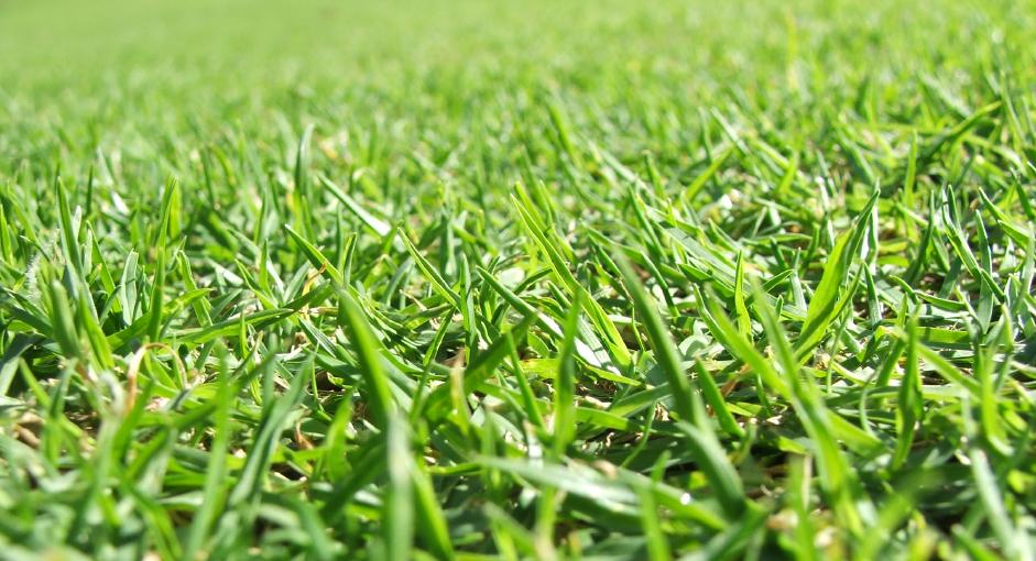 pelouse tendue