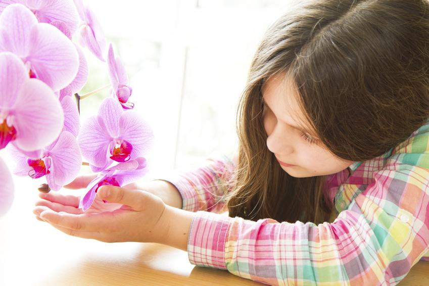 Petite fille soignant une orchidée