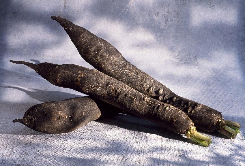 Le radis noir