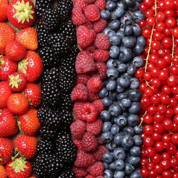 rangées de fraises, myrtilles, framboises, groseilles