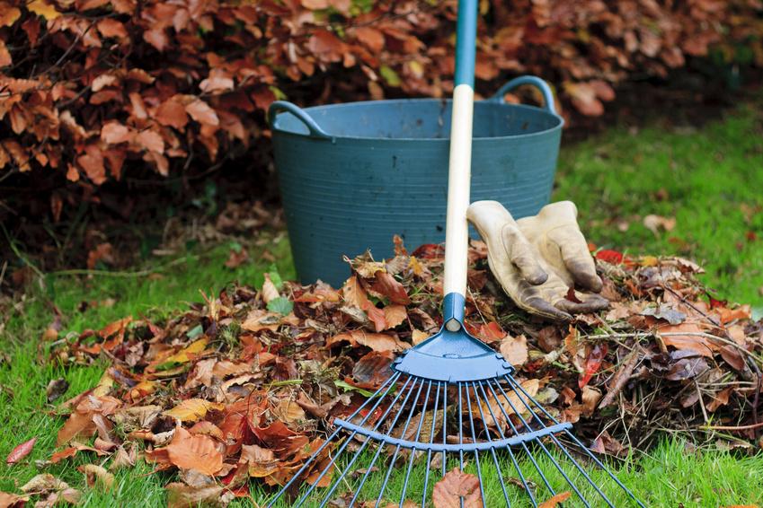 Rateau pour feuilles
