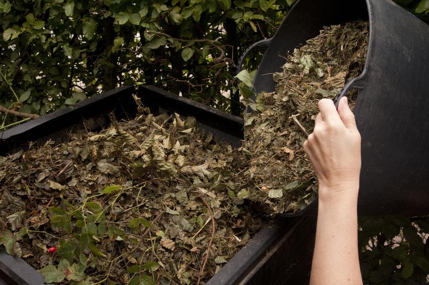 Récupération des végétaux pour le compost