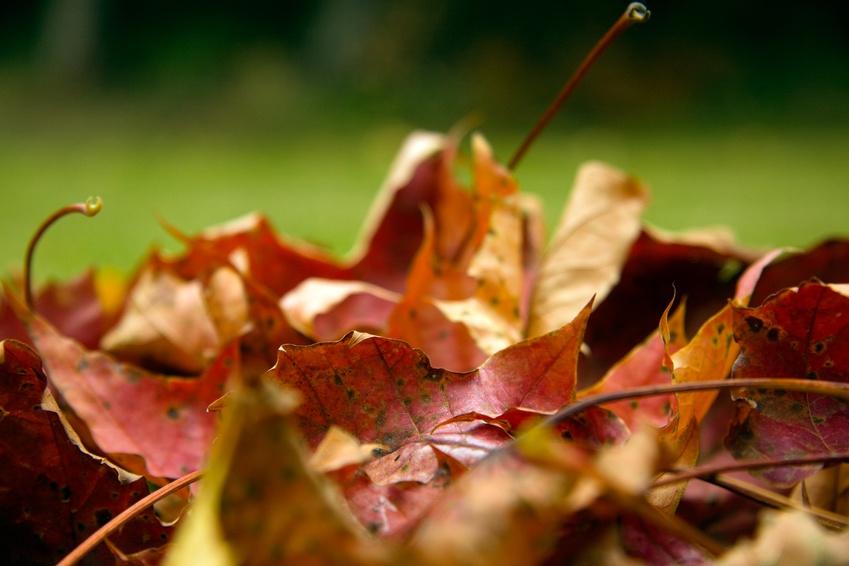 tas de feuilles mortes