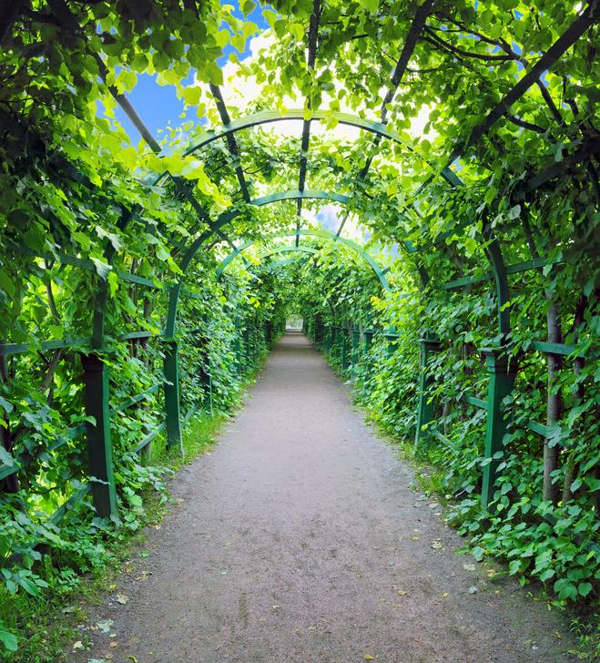 Devis d coration jardin treillage bordures for Devis jardin